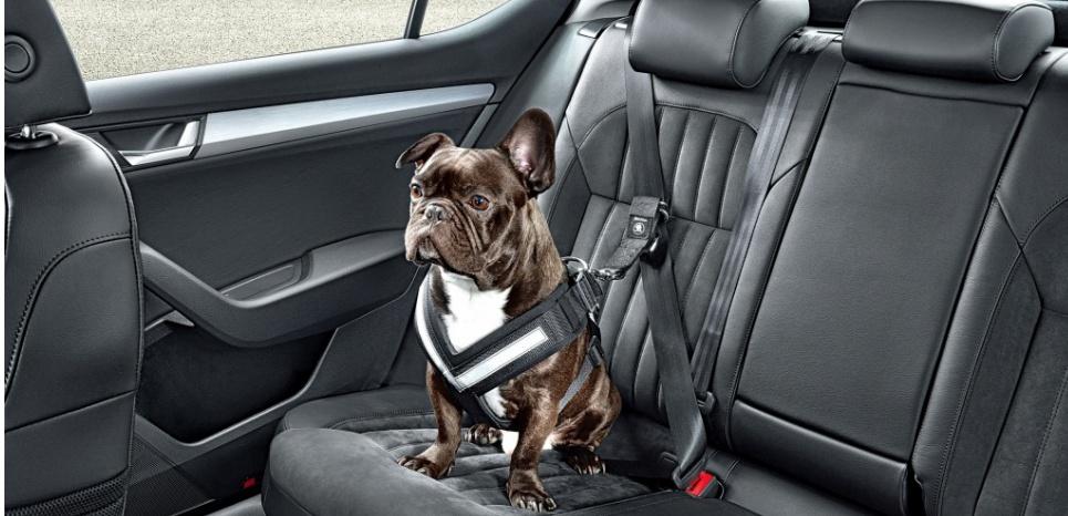 attache chien pour voiture u car 33. Black Bedroom Furniture Sets. Home Design Ideas