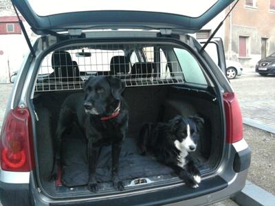 barri re de s curit pour chien en voiture u car 33. Black Bedroom Furniture Sets. Home Design Ideas