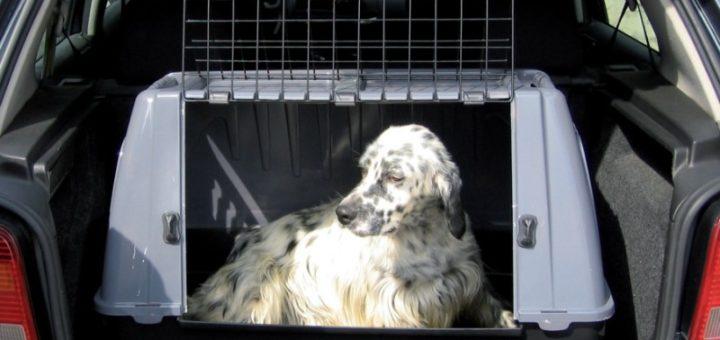 cage transport voiture chien u car 33. Black Bedroom Furniture Sets. Home Design Ideas